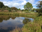 Numerous ponds can be found at Bradley Green copyright Anne Heathcote