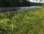 Bramshill long pond copyright Francesca Dunn