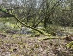 Example of different pond habitats found at Breney Common copyright Francesca Dunn