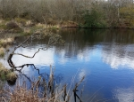 One of the many ponds at Breney Common copyright Francesca Dunn