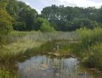 One of the ponds at Castor Hanglands copyright Pete Case