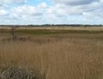 View across Catfield & Sutton Fen 2 copyright Pete Case