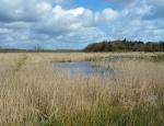 View across Catfield & Sutton Fen copyright Pete Case