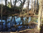Mud Snail Pond at Lane End, Chailey Common copyright Francesca Dunn