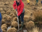 Volunteers digging up Purple Moor Grass tussocks at Chailey Common copyright Francesca Dunn
