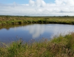 One of the ponds at Dowrog Common copyright Pascale Nicolet
