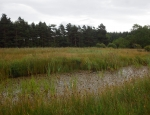 One of the many ponds at Foxglove Covert copyright Anne Heathcote
