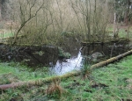 One of the ponds at Frost's Common copyright Colin & Christine Lang