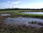 Several of the shallow pools at Gallows Bridge Farm copyright Pete Case