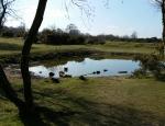 Bellamoss Pond at Headley Heath copyright Francesca Dunn