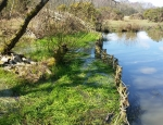 The natural fence placed in Brimmer Pond at Headley Heath copyright Francesca Dunn