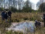 Volunteers looking for Three-lobed Water-crowfoot at Hothfield Common copyright Francesca Dunn