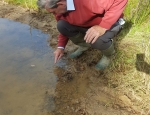 Volunteer Dennis Skinner sowing Starfruit seeds at Inholms copyright Pete Case