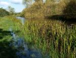 Langham Pond copyright Francesca Dunn