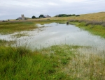 Lindisfarne dune slacks copyright Anne Heathcote
