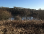 One of the ponds at Newdigate Brickpits copyright Francesca Dunn