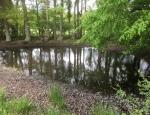 One of Moat Farm's ponds copyright Francesca Dunn