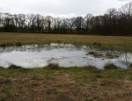 One of the Three-lobed Water-crowfoot ponds at Moat Farm copyright Francesca Dunn