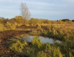 New ponds created at Oulton Marshes winter 2016 copyright Pete Case