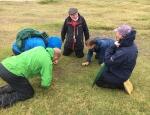 Looking for interesting dune slack species at Penhale Sands copyright Naomi Ewald
