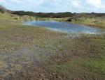 One of the ponds at Penhale Sands copyright Francesca Dunn