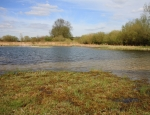 One of the ponds at Pinkhill Meadow copyright Pete Case