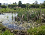 Surveying for invertebrates at Rawcliffe Meadows copyright Anne Heathcote
