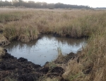 An example of one of the ponds in the fen habitat at R&L Fen copyright Pete Case