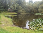 One of the many ponds and pools at Sound Common copyright Anne Heathcote
