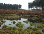 One of the pingo ponds at Spring Covert copyright Pete Case