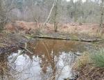 Spring Covert 4 ponds copyright Pete Case