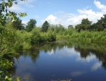 A spectacular view at Strensall Common copyright Anne Heathcote
