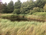 One of the ponds on Thorney Island copyright Francesca Dunn