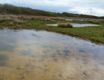 Some of the Million Ponds Project ponds created at Windmill Farm copyright Francesca Dunn