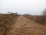 Management of Ysgeifiog's drovers road copyright Hannah Shaw