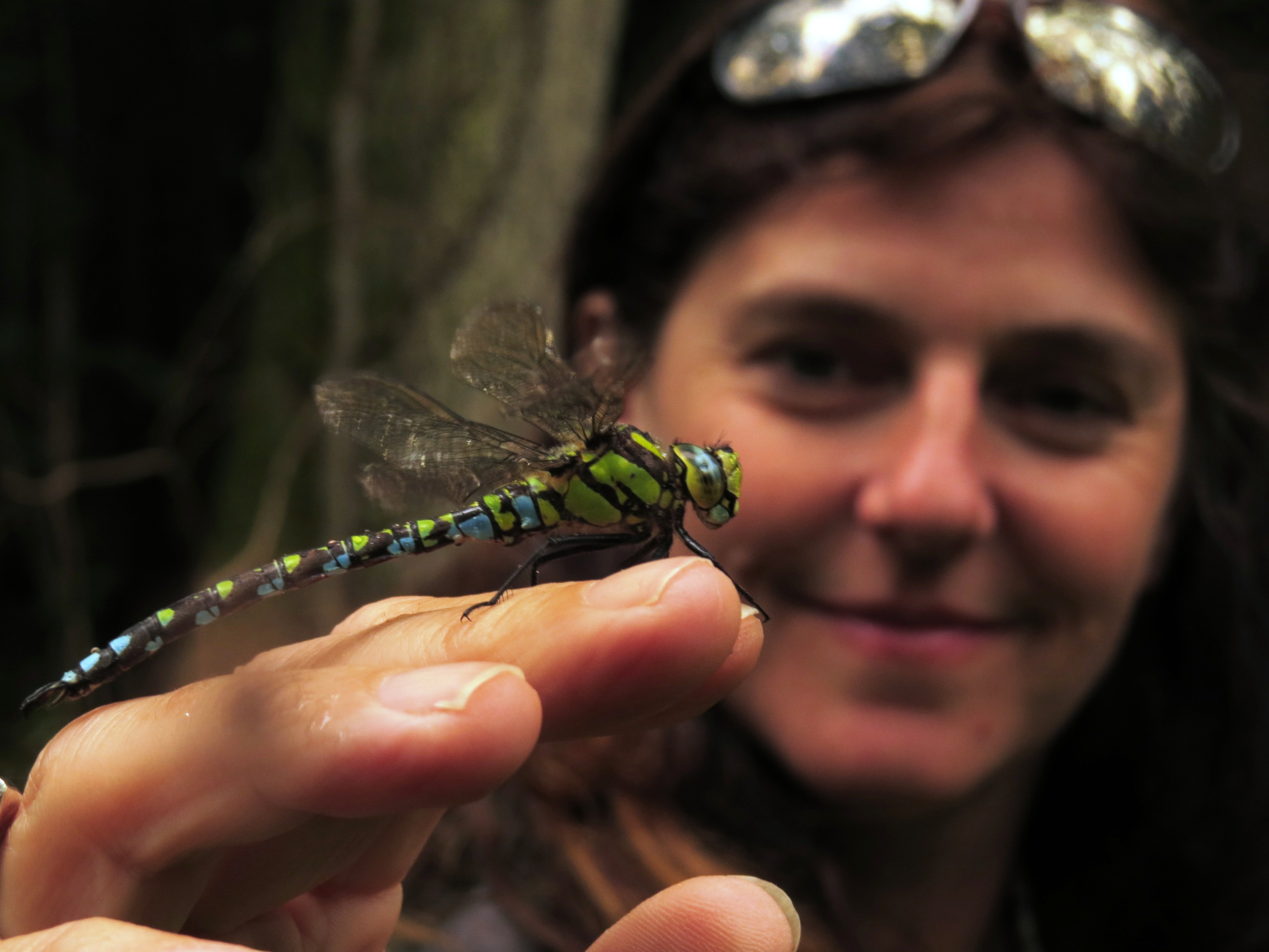 Anne & Southern Hawker