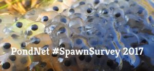 Spawn Survey graphic 02 small for homepage