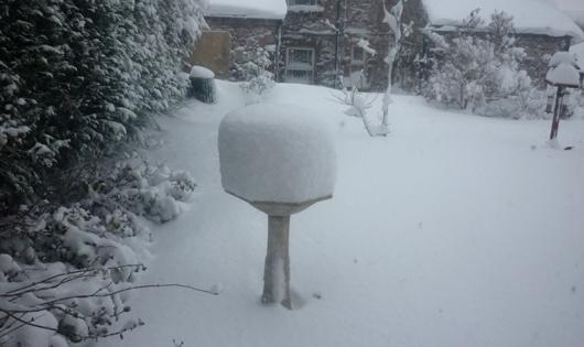 Snowy garden copyright Chris Monk