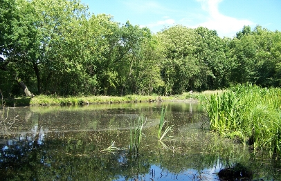 South yorks_Sykehouse pond _II