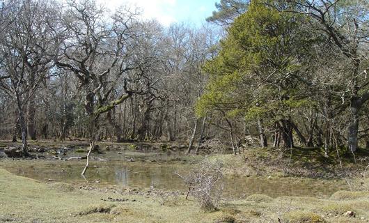 Species rich temporary pond on base-rich marl copyright Naomi Ewald