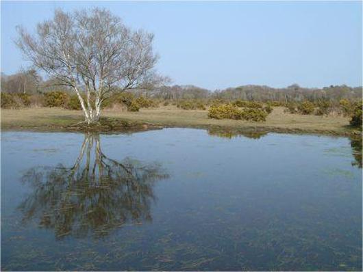 Wootton Pond copyright Naomi Ewald