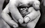 frog-hp-tb