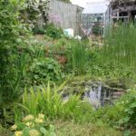 Read our Creating Garden Ponds booklet for advice on digging, filling, planting and caring for your pond