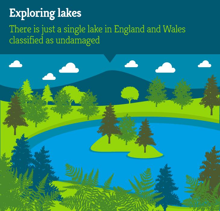 Habitat-map-sections-lake2