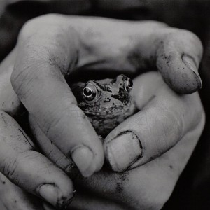 Frog_B&W-1_square
