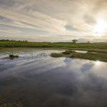 55. The Begwns, Powys ©