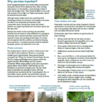 Managing trees around ponds