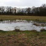 46. Orlestone Forest, Kent