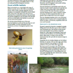 What makes a good wildlife pond?