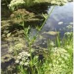 43. Langham Pond, Surrey